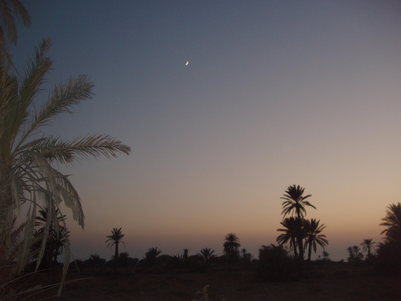 zu verkaufen insel kerkennah sfax tunesien kerkennah islands. Black Bedroom Furniture Sets. Home Design Ideas