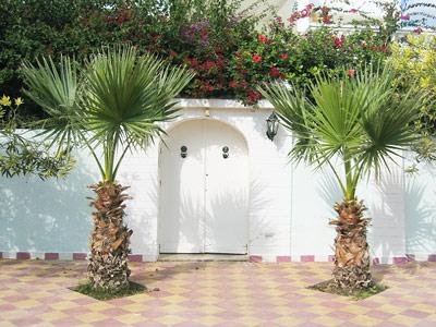 Zu verkaufen villa korba nabeul tunesien jasmin for Achat de maison en tunisie