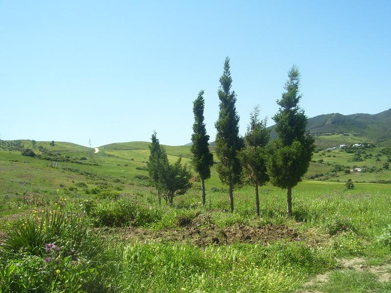 Vente terrain agricole diki tangeri maroc ksar sghir for Construction terrain agricole