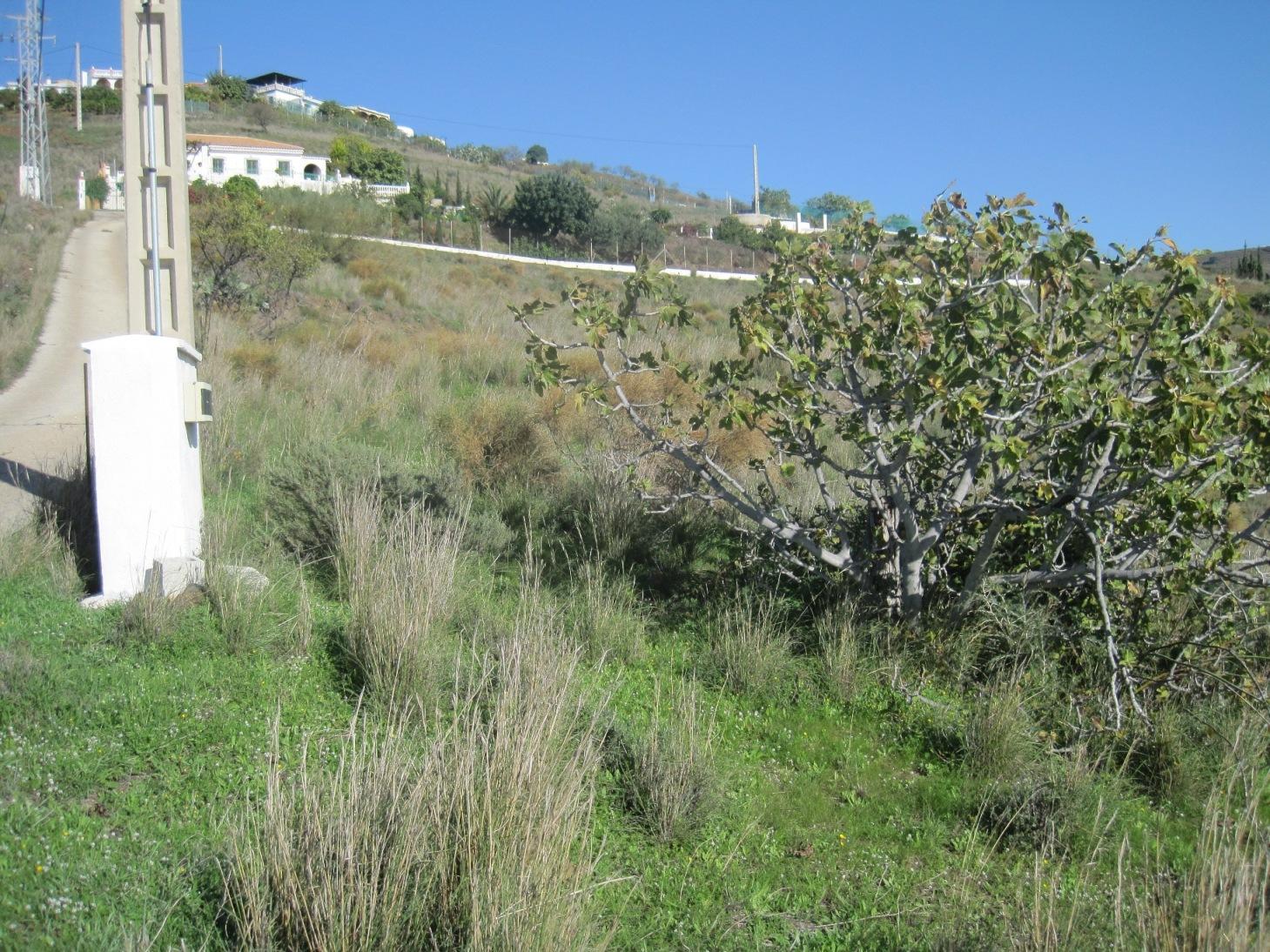 Vente terrain agricole salobre a granada andalucia for Agrandissement maison terrain agricole