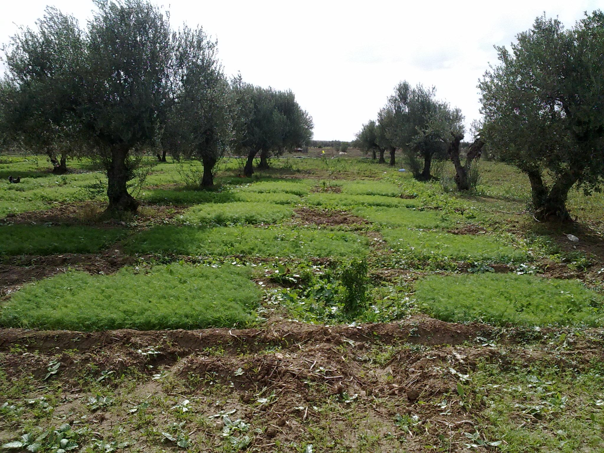 Vente terrain agricole borj el amri tunisi tunisie for Agrandissement maison terrain agricole
