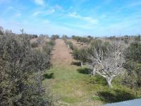 terrain agricole a vendre portugal